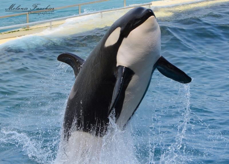 [Orques captives] Inouk Dsc_0910