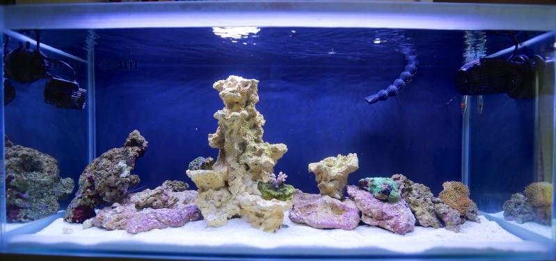 Presentation de mon aquarium 136l Image11