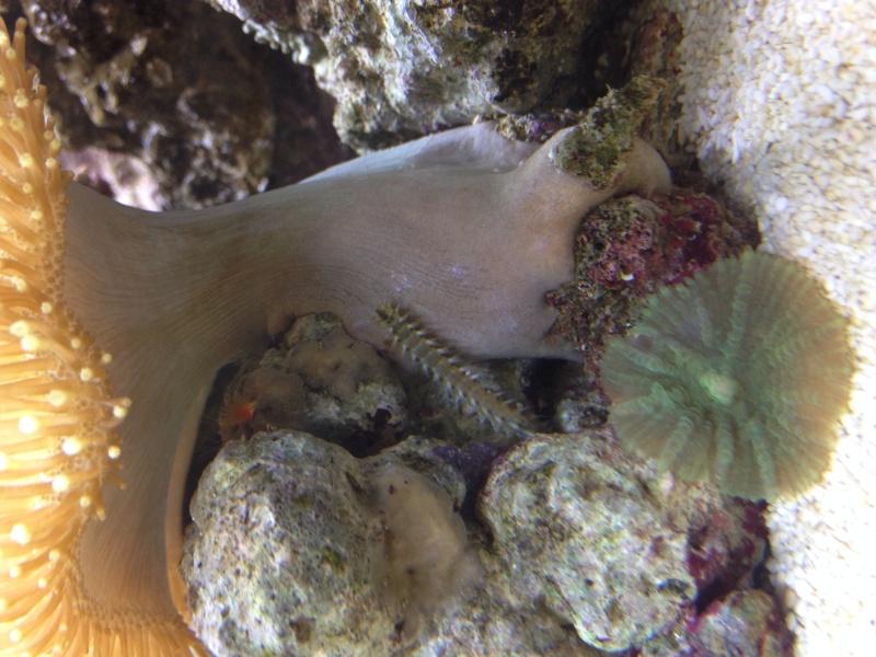 Presentation de mon aquarium 136l Image12