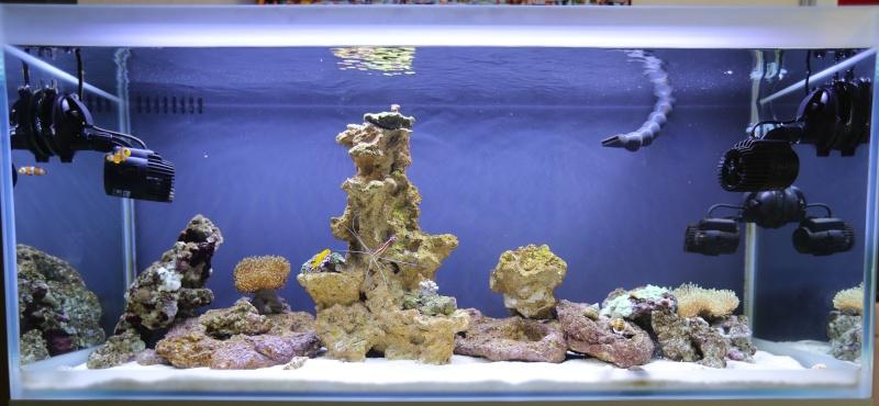Presentation de mon aquarium 136l K08a0510