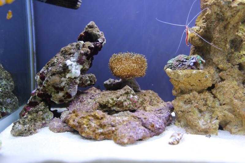 Presentation de mon aquarium 136l K08a0511