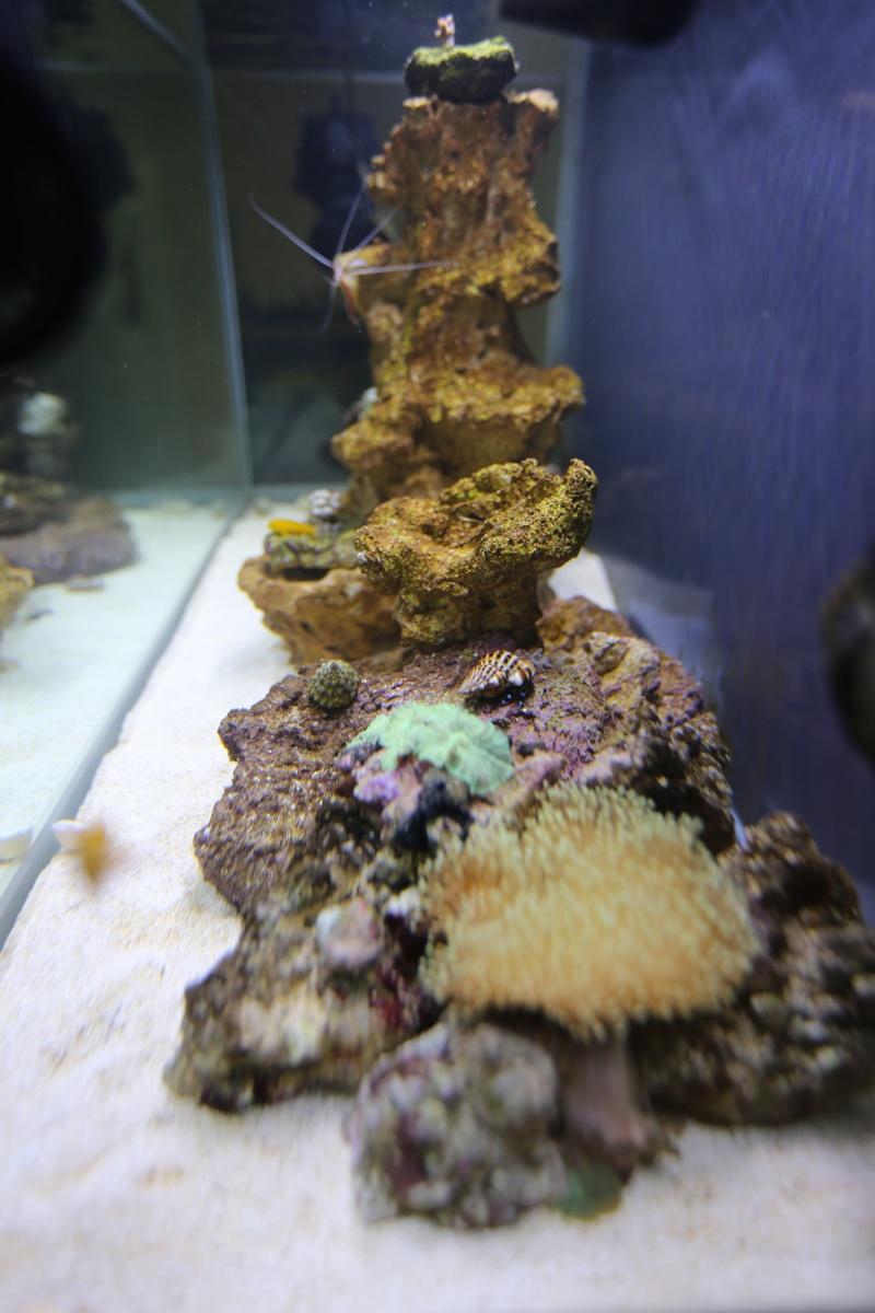 Presentation de mon aquarium 136l K08a0514