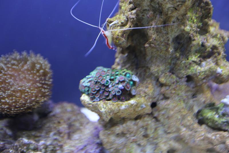 Presentation de mon aquarium 136l K08a0515