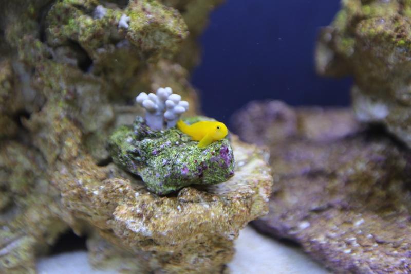 Presentation de mon aquarium 136l K08a0516