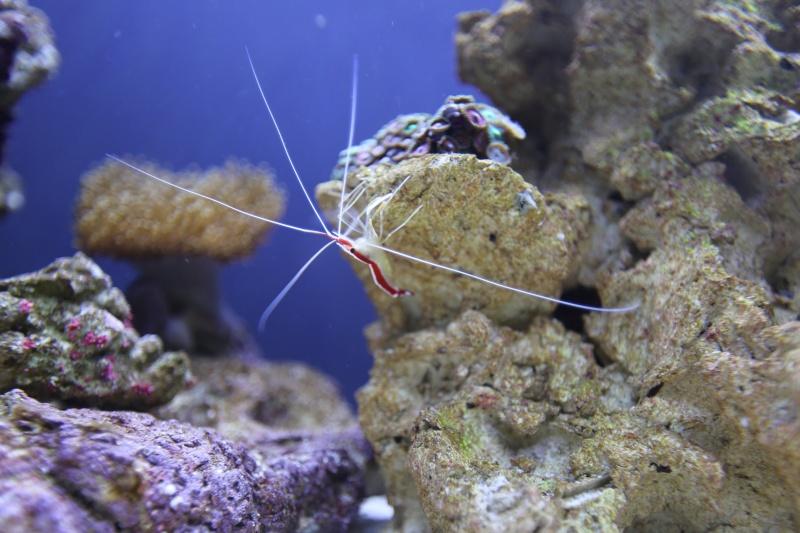 Presentation de mon aquarium 136l K08a0517