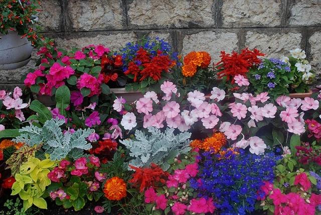 mes centaines de fleurs devant mon resto 8911