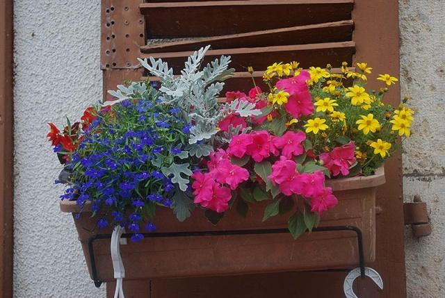 mes centaines de fleurs devant mon resto 9011
