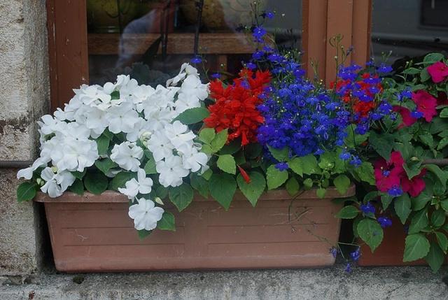 mes centaines de fleurs devant mon resto 9210