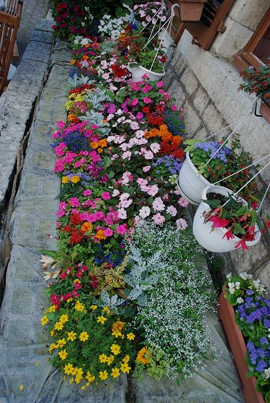 mes centaines de fleurs devant mon resto 9410