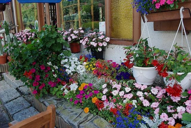 mes centaines de fleurs devant mon resto 9510