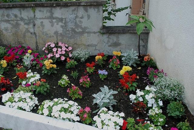 mes centaines de fleurs devant mon resto 9711