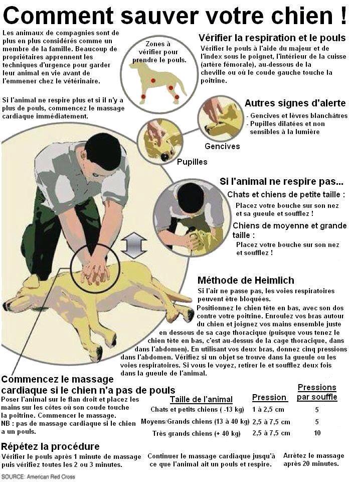 les bons gestes pour  sauver votre chien  10492010