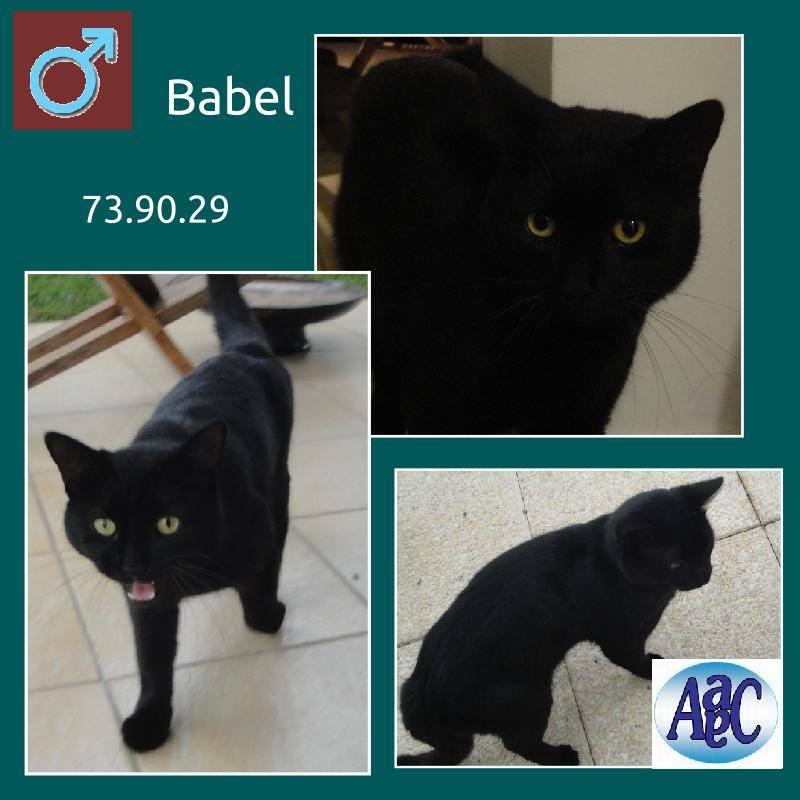 Babel chat noir 9303_410
