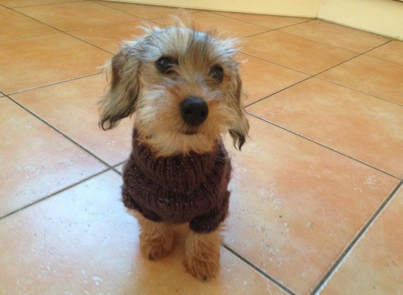 Bébé teckel, manteau ou pas? Image142