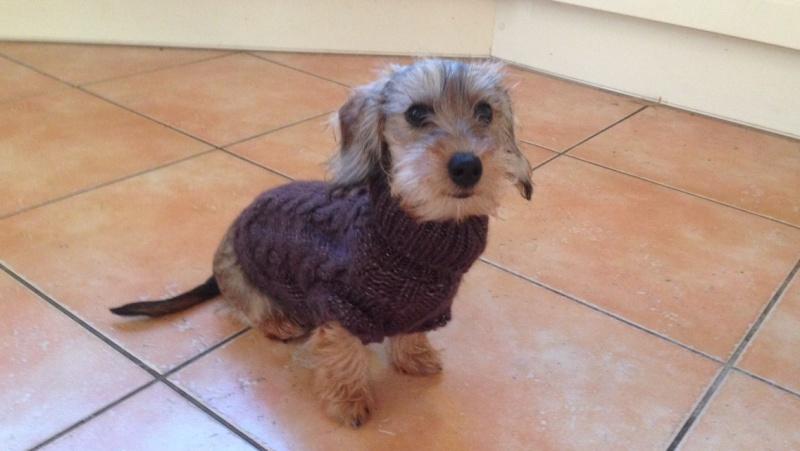 Bébé teckel, manteau ou pas? Image143