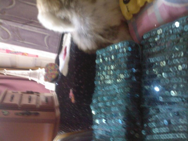 La dollHouse de ma pullip ! M10