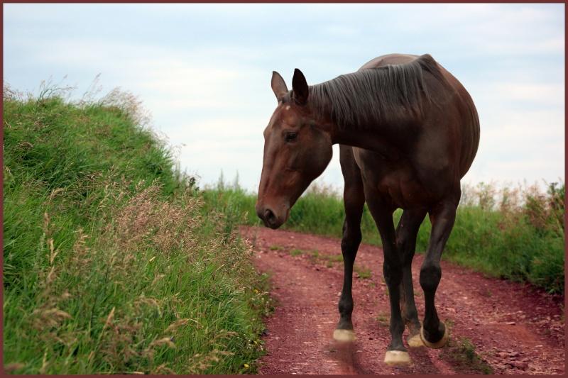 Présentez-nous vos chevaux ! <3 Montag10