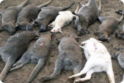 Mutilations animales :2002, le verdict du FBI Emissi11