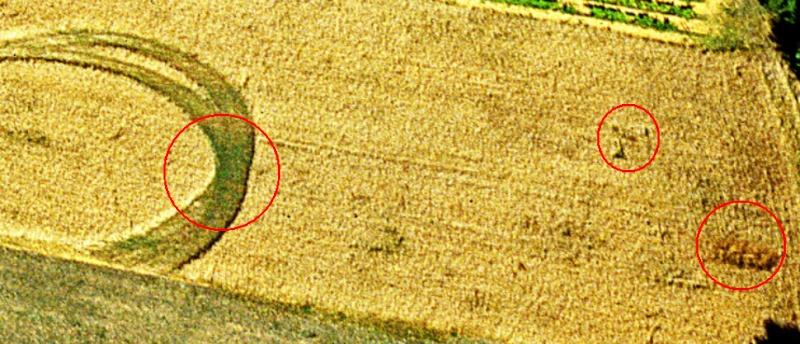 Anomalie dans un champ de blé à Rivières (16) Nouvea25