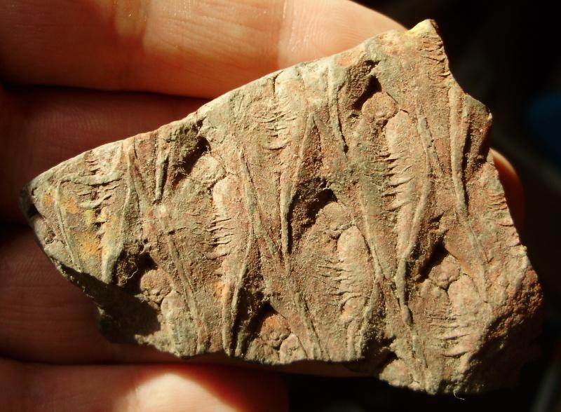 L Carboniferous of Poland C00f7610