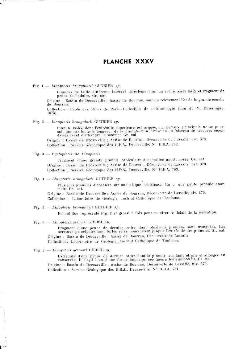Linopteris Presl , 1838.    Hexagonocarpus Renault ,1890. P_229_11