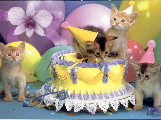 Joyeux anniversaire Jennifer Chat1010