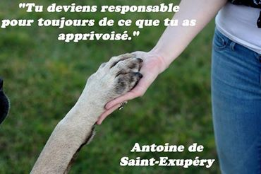 citations sur le chien 16047911