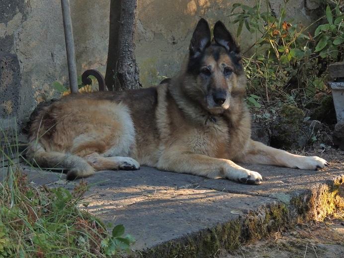 1 FOIS PAR JOUR ET PAR MEMBRE DES PHOTOS DE NOS ANIMAUX FAMILIERS 1er_se11