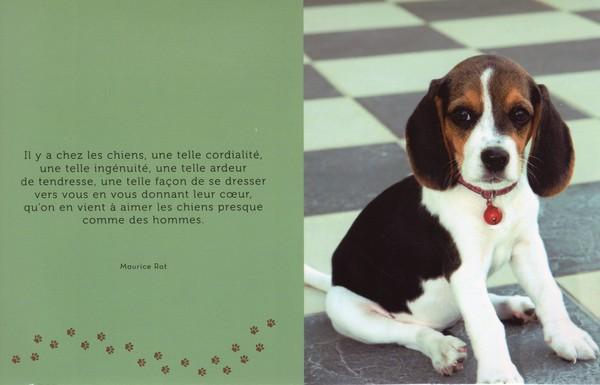 citations sur le chien - Page 2 4cb00c10