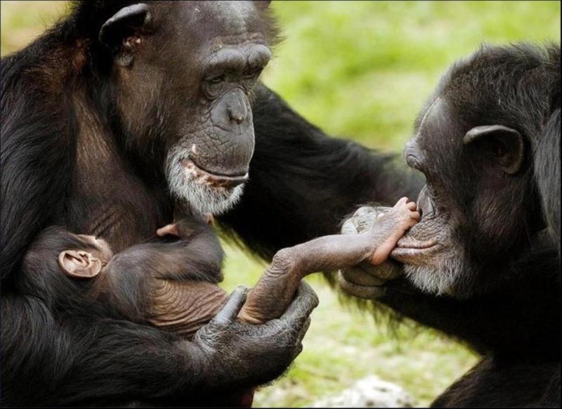 Les mamans et leur bébé 56419710