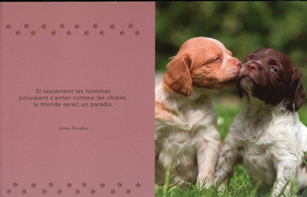 citations sur le chien A79a1210