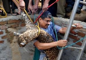 gens sauvant des animaux - Page 2 Le-leo10
