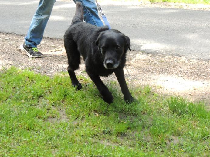 MAX chien Mercre17