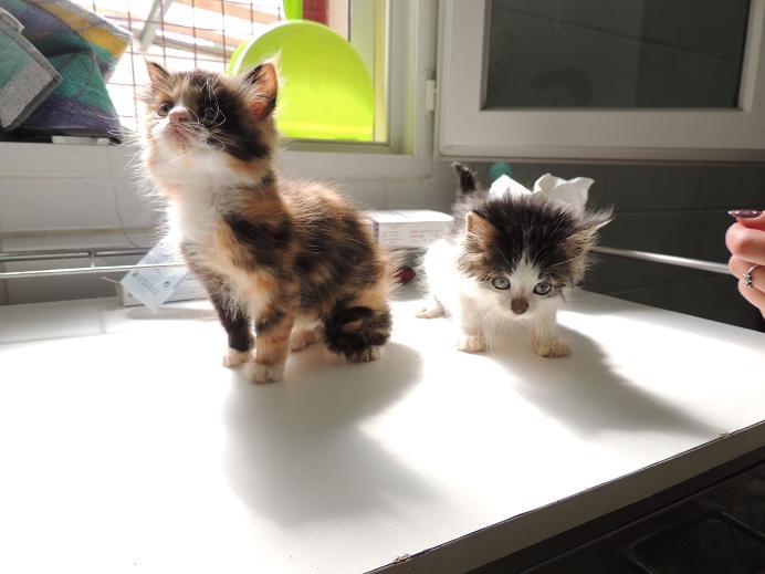 2 nouveaux chatons en juillet 2014 Mercre44