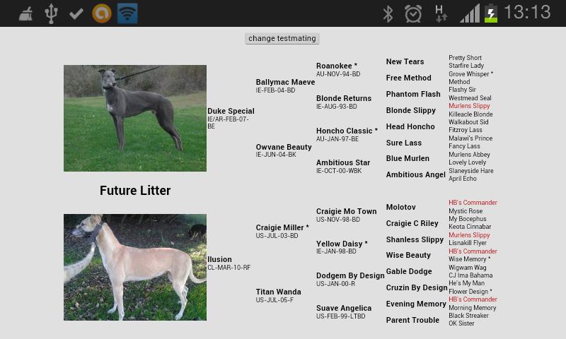 "Venta de cachorros ""Duke Special x Ilusion"" Screen13"