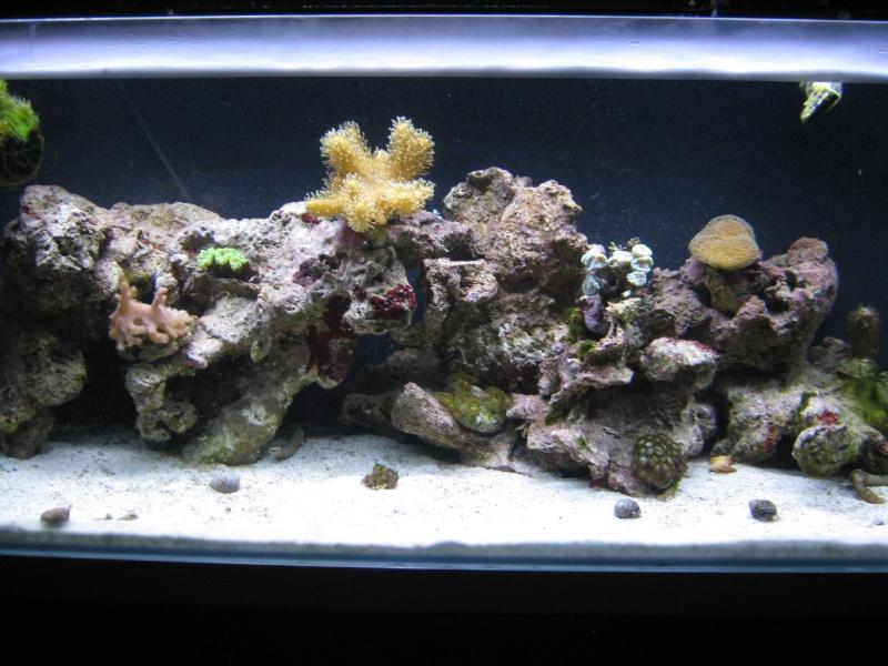 L'aquarium de la tite nouvelle Img_0912