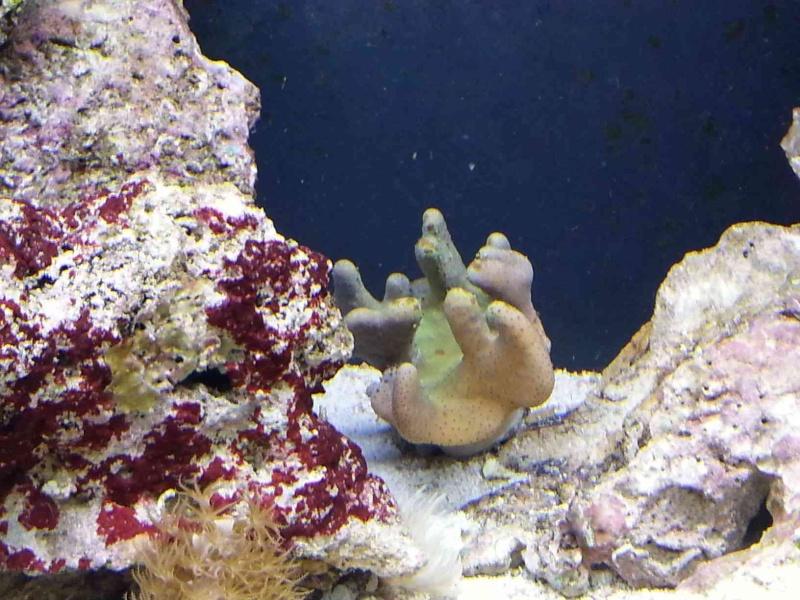 L'aquarium de la tite nouvelle - Page 2 Lobo10