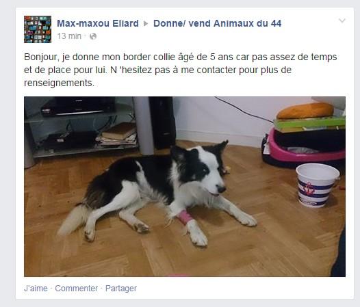 Mâle Border collie - Fourrière Sud 44 - délai 19/12/2013 Donne_10
