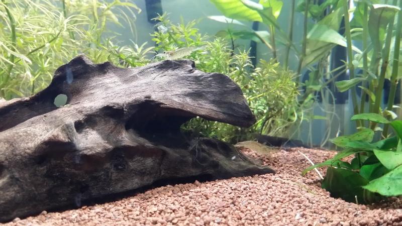 Premier aquarium betta - Page 2 20141215