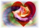 En Christ, sont cachés tous les trésors de la sagesse et de la connaissance  _rose_15