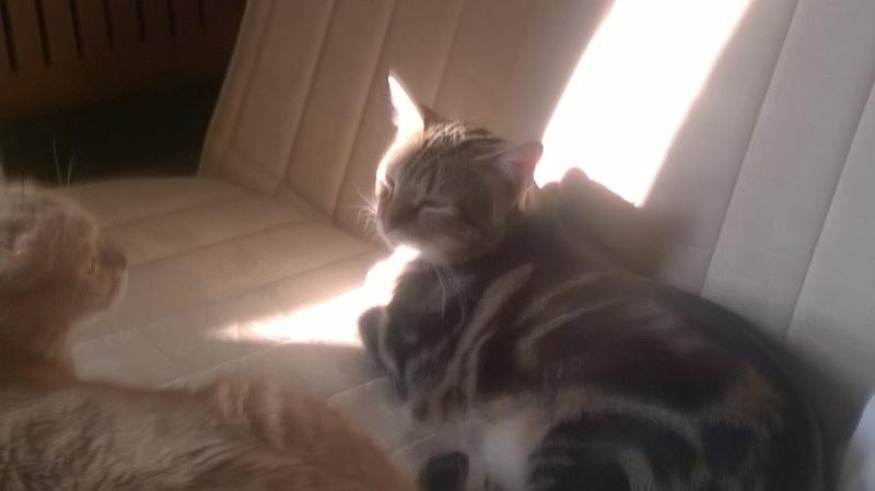 Ilios chat né en septembre 2012  - Page 2 10609510
