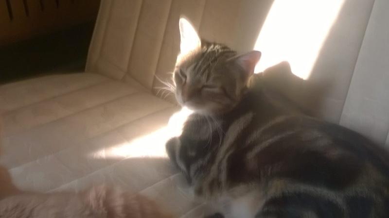 Ilios chat né en septembre 2012  - Page 2 10702110