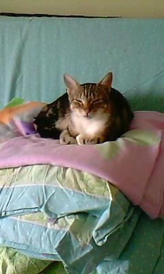 Ilios chat né en septembre 2012  - Page 2 Img11810