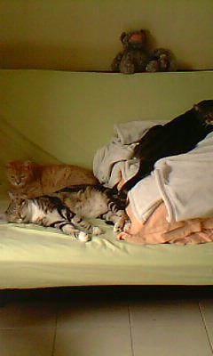 Ilios chat né en septembre 2012  - Page 2 Img11910