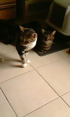 Ilios chat né en septembre 2012  - Page 2 Img11912