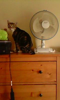 Ilios chat né en septembre 2012  - Page 2 Img11913