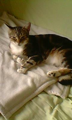 Ilios chat né en septembre 2012  - Page 2 Img11914