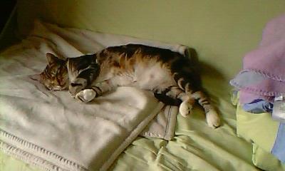 Ilios chat né en septembre 2012  - Page 2 Img11915