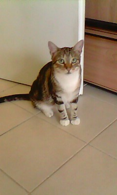Ilios chat né en septembre 2012  - Page 2 Img12010