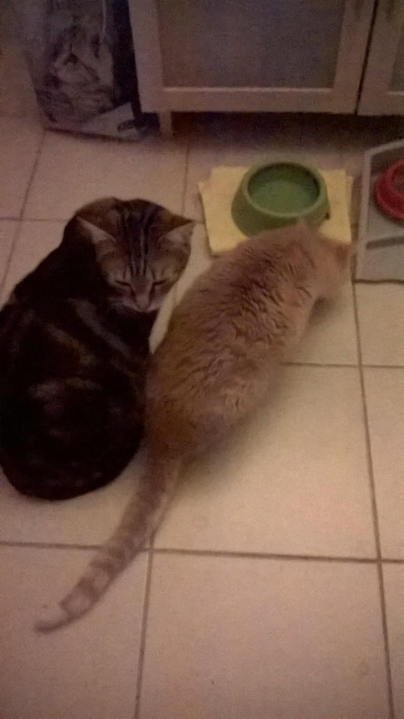 Ilios chat né en septembre 2012  - Page 2 Wp_20112